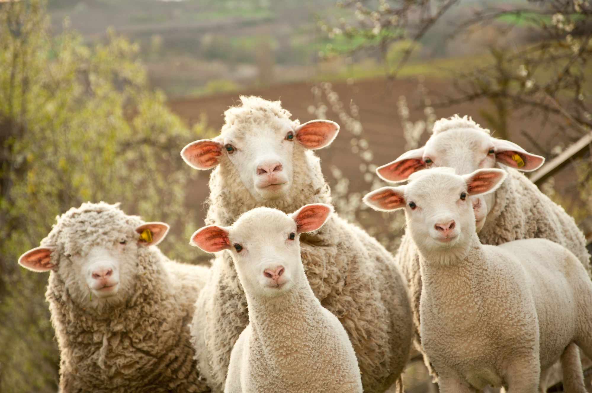 PACK & SEND delivers to Australian Wool Innovation's global offices worldwide